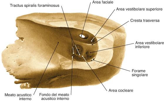 meato acustico interno