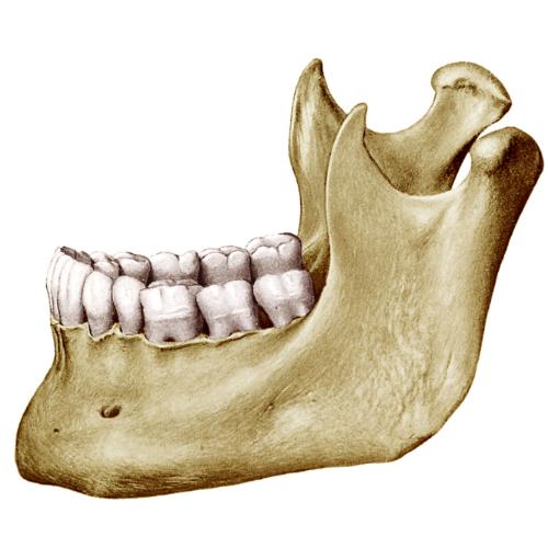 mandibola immagine