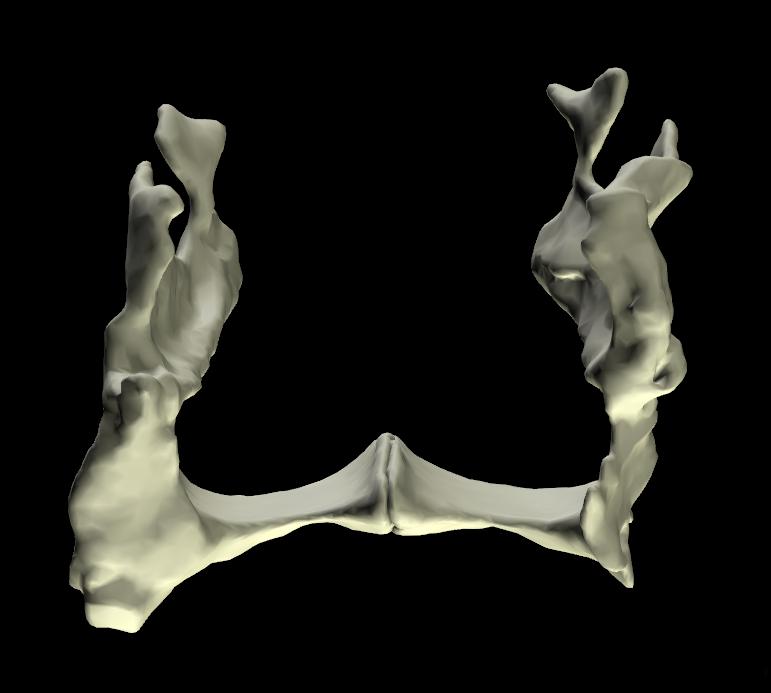 ossa palatine