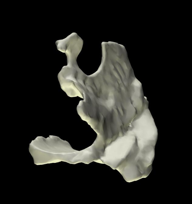 osso palatino 3d