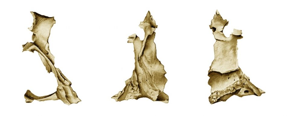 osso palatino