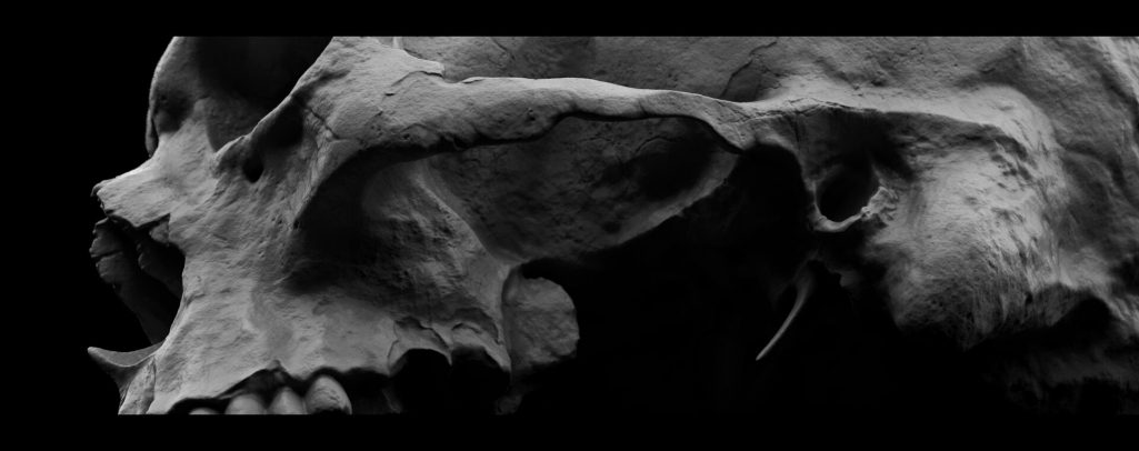 fossa pterigopalatina